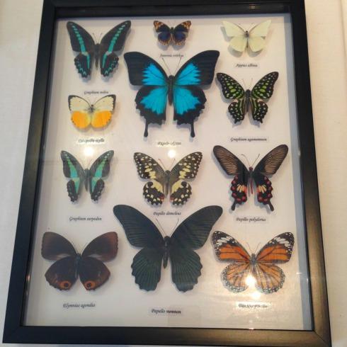 ElizabethButterflies